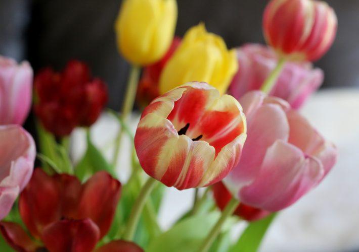 Missgunst Mrs. Brightside Blogger Hamburg Persönlicher Blogpost Personal Post Gedanken Gefühle Text Tulpen